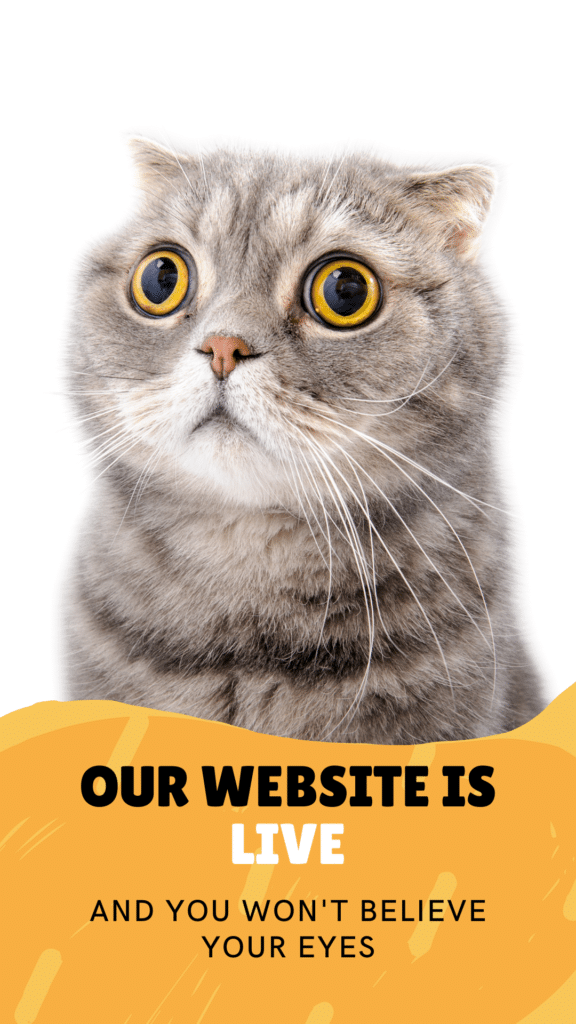 launching a new website